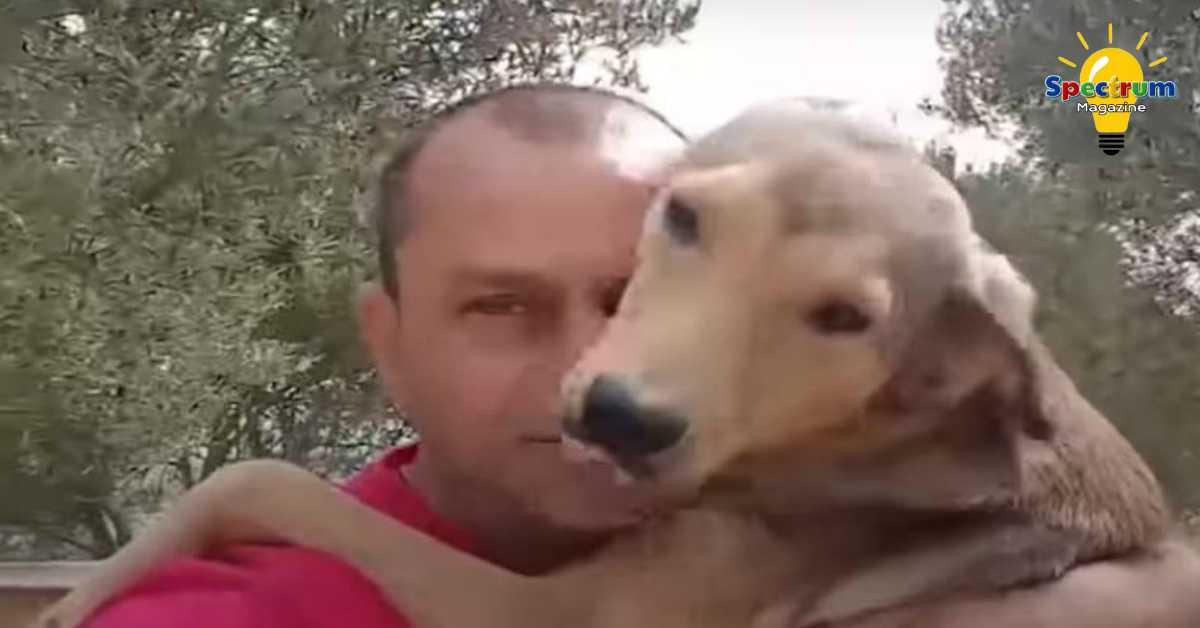 dieren verzorgen