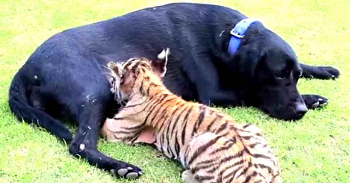 echte vriendschap 3