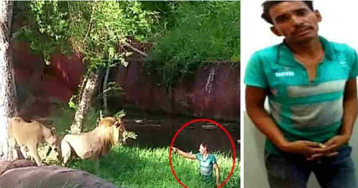 wat eet een leeuw 4