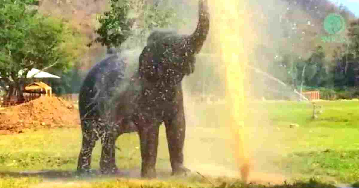 bedreigde olifanten 1