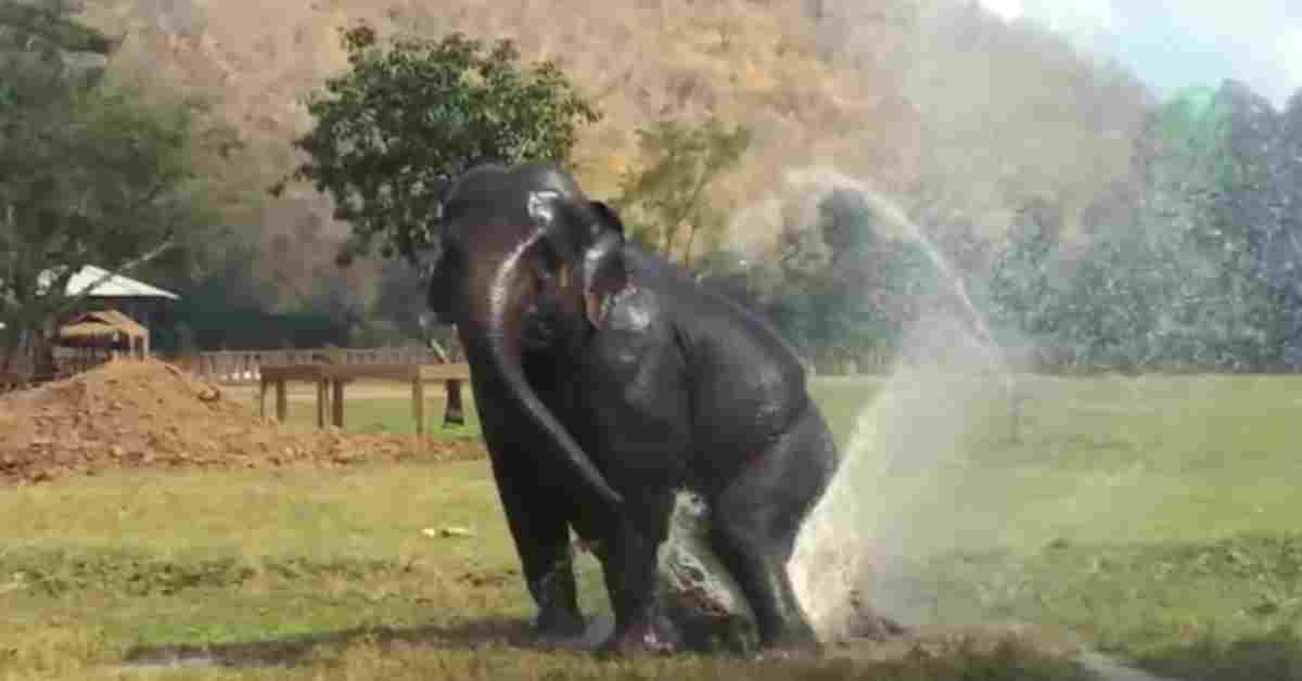 bedreigde olifanten 2