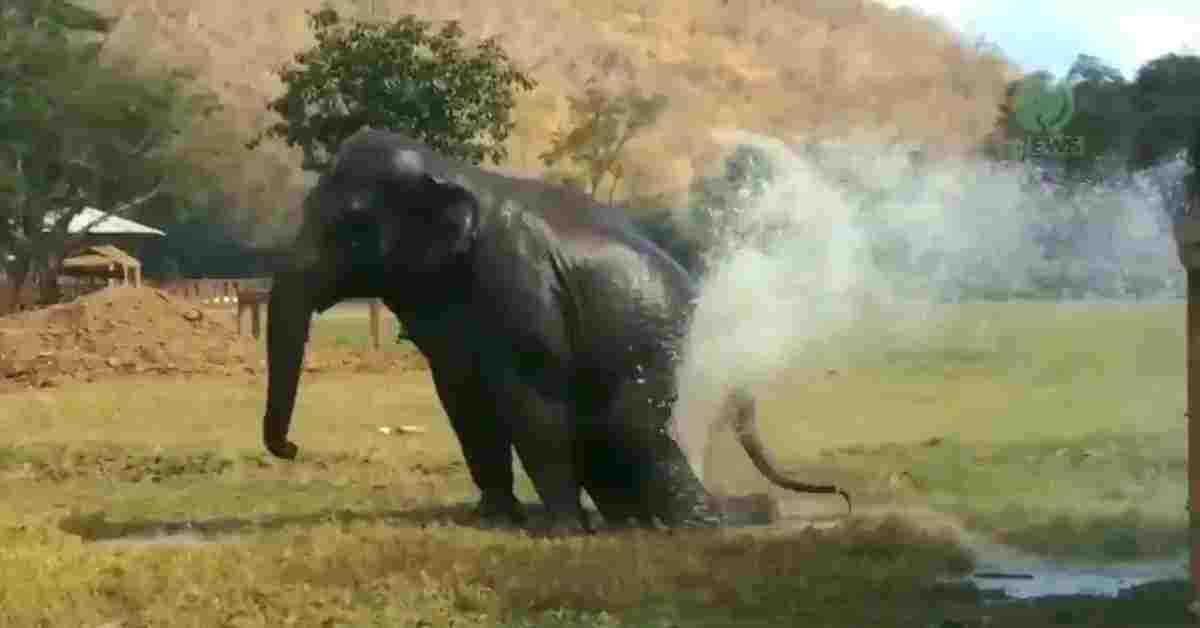 bedreigde olifanten