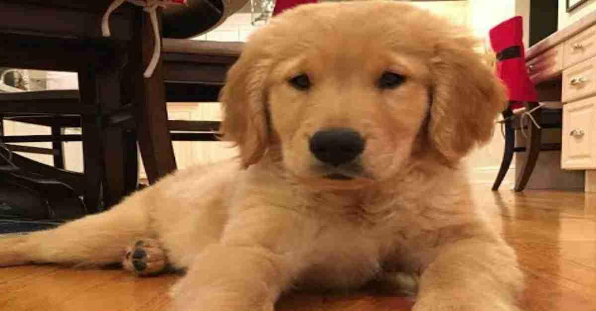 een hond adopteren 1