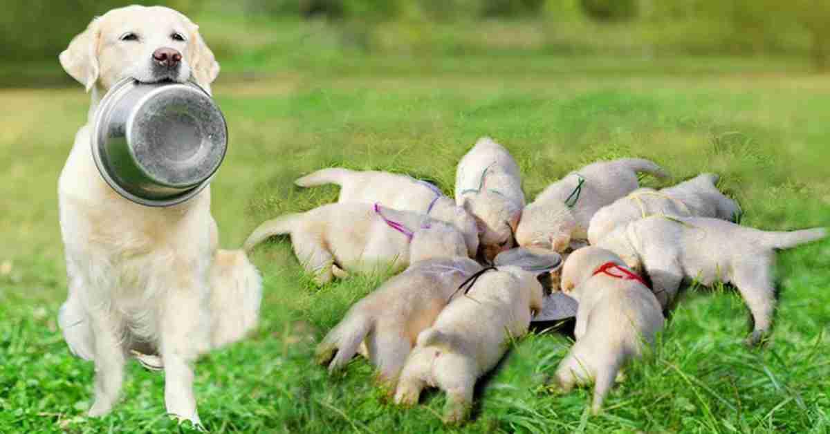 een hond adopteren 3