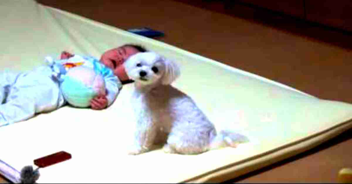 goede verzorging van een hond