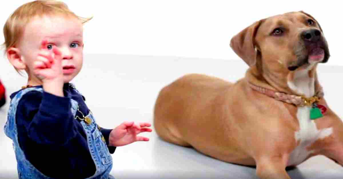 ik wil een hondje zoals deze pitbull 2