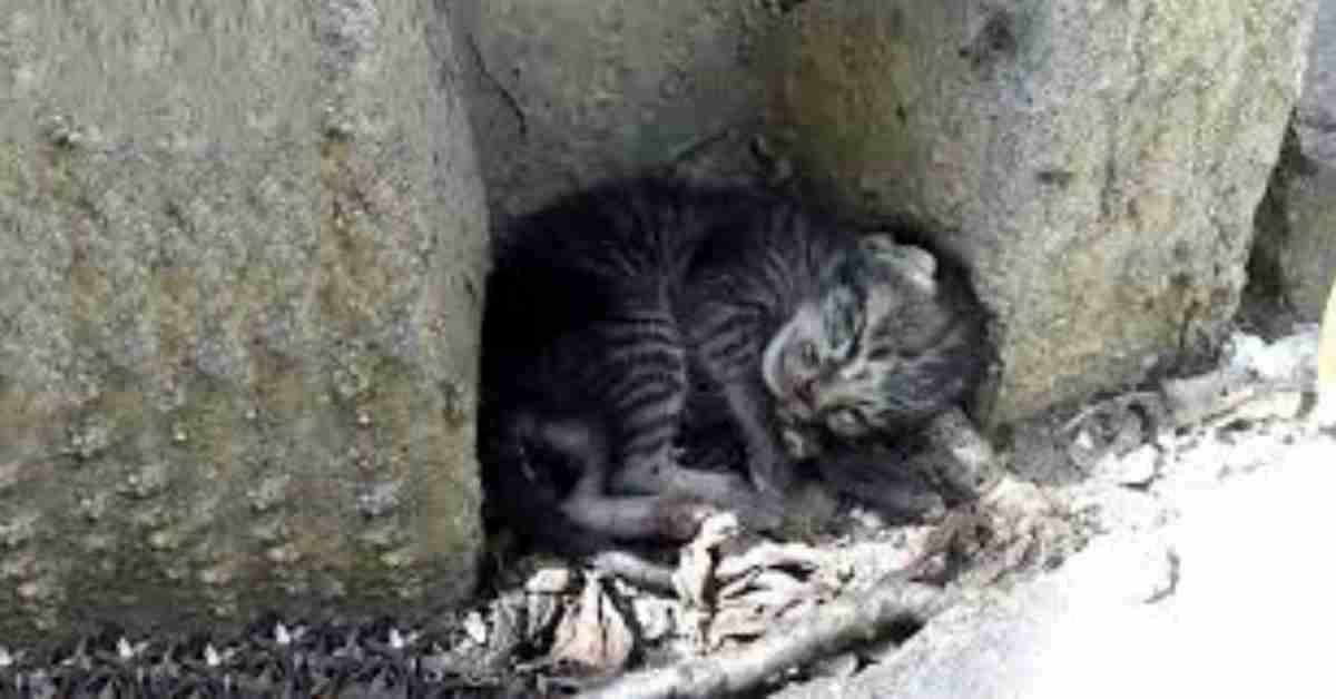 kat gezocht 1