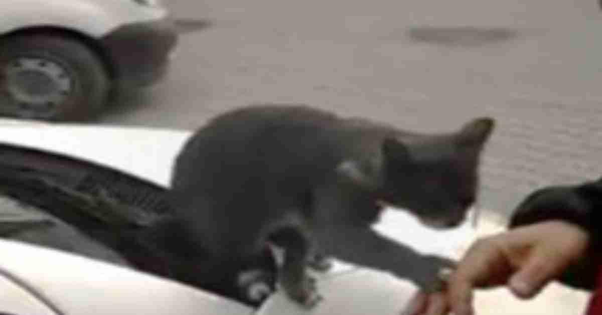 kat gezocht 2