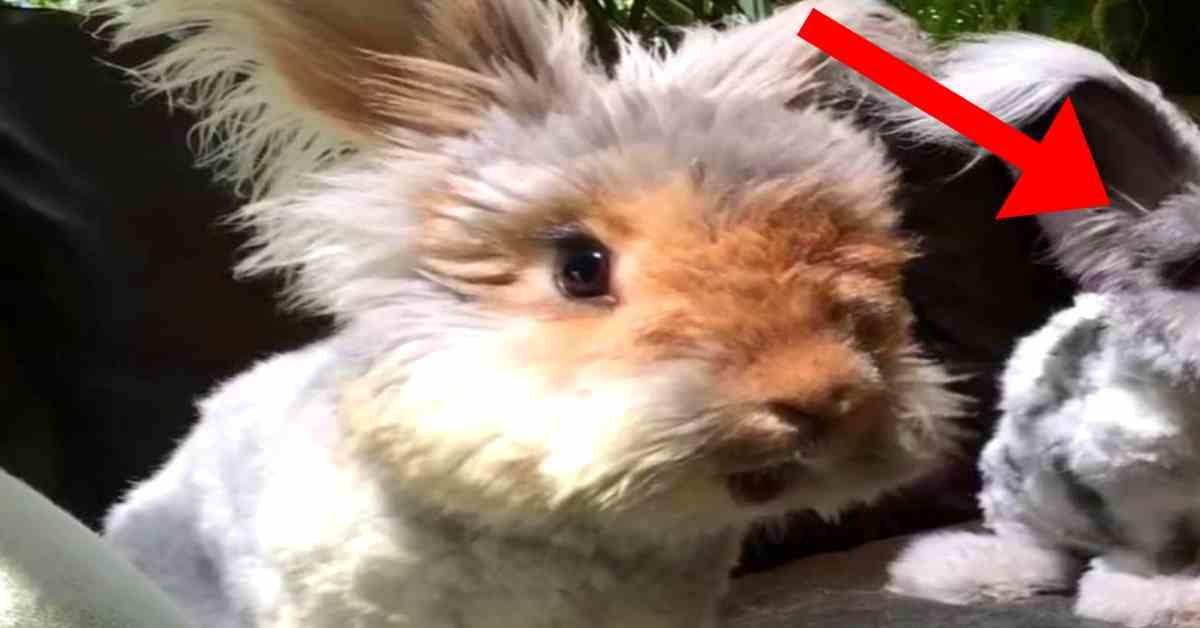 konijnen weetjes 4