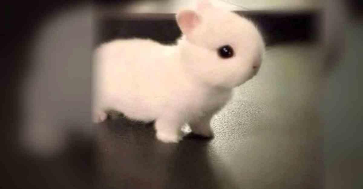 konijnen weetjes
