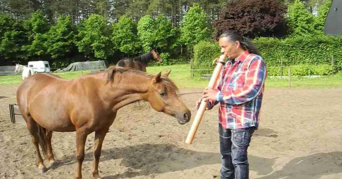 manege paarden 1