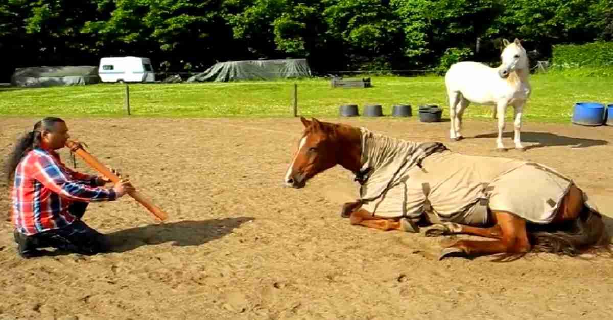 manege paarden 2