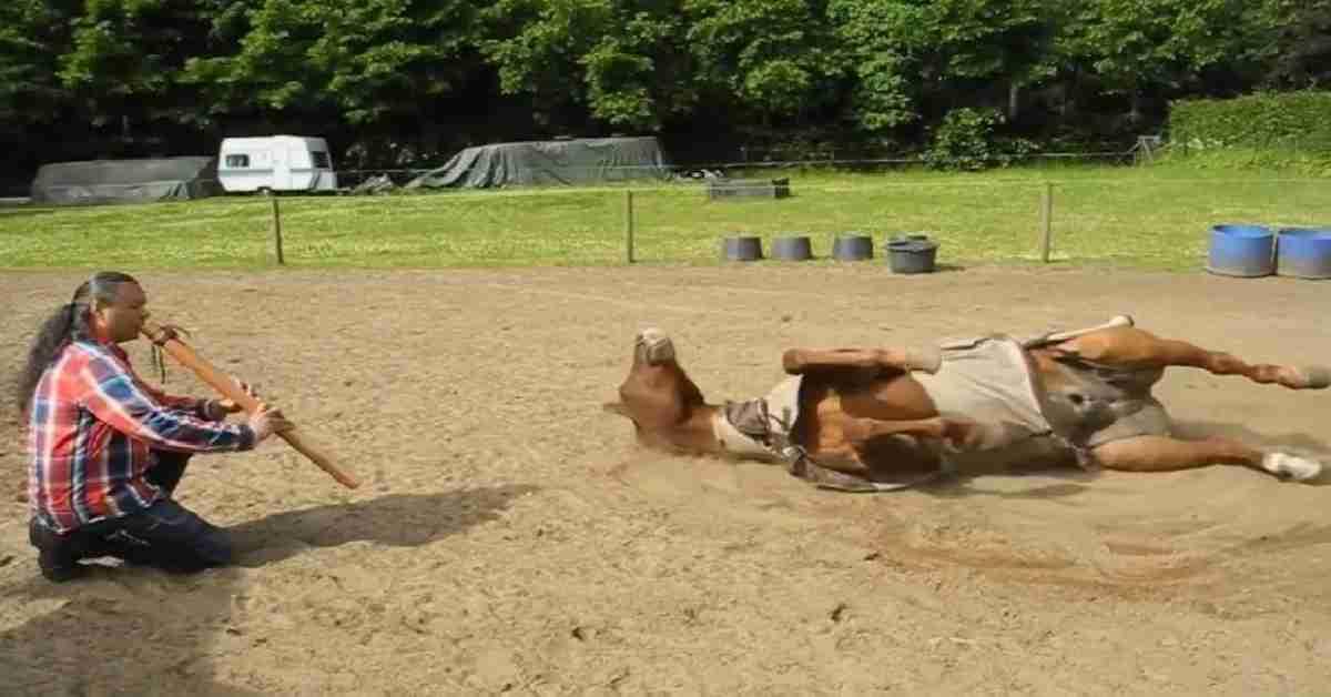 manege paarden 3
