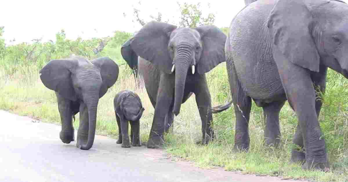 olifant zijn leefgebied 1