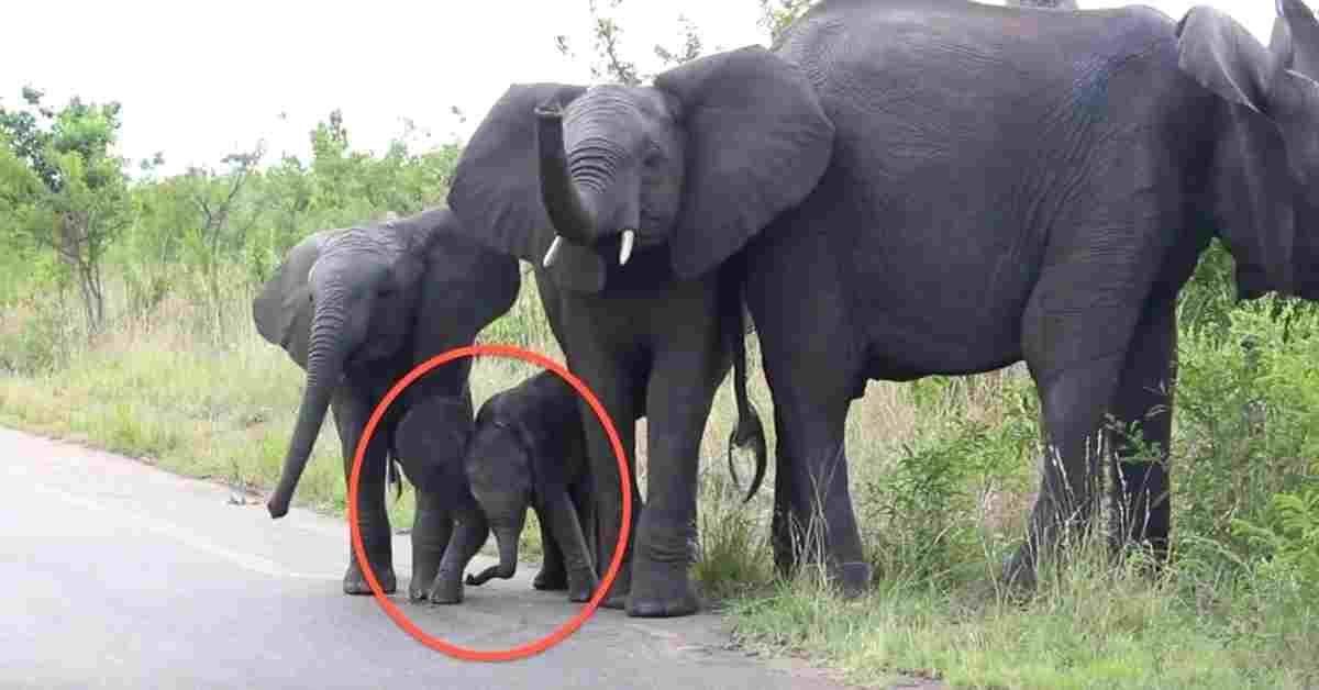 olifant zijn leefgebied 2