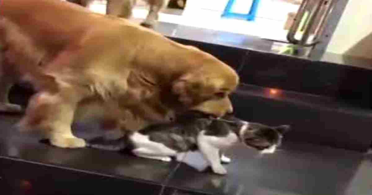 onze hond stopt een gevecht 1