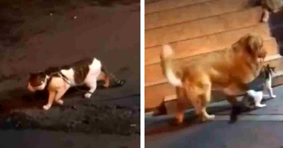 onze hond stopt een gevecht 3