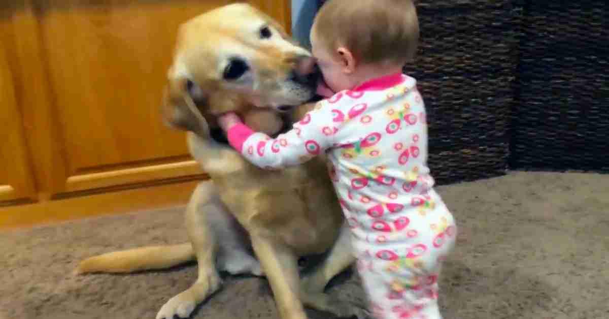 relatie baby en hond 1