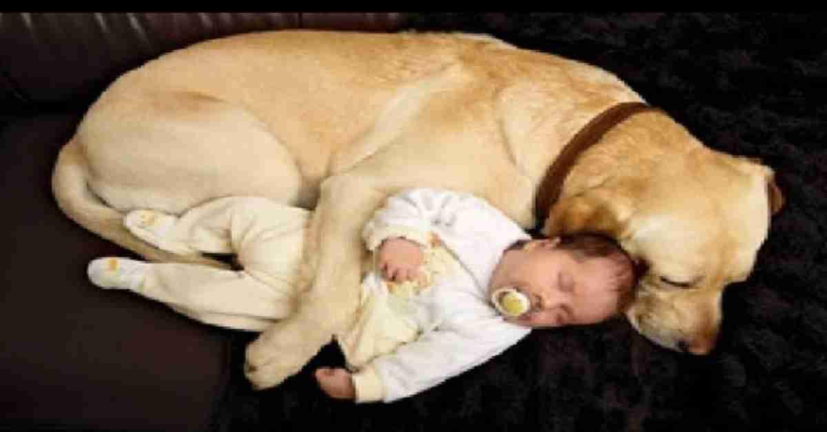 relatie baby en hond 2