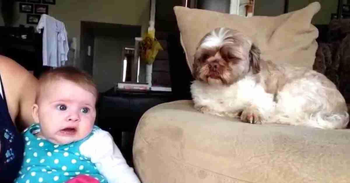 relatie baby en hond