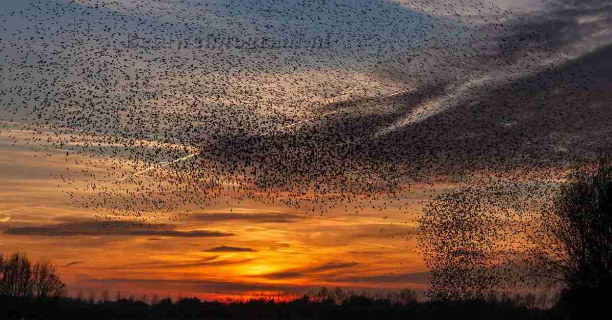 soorten vogels in Nederland 1