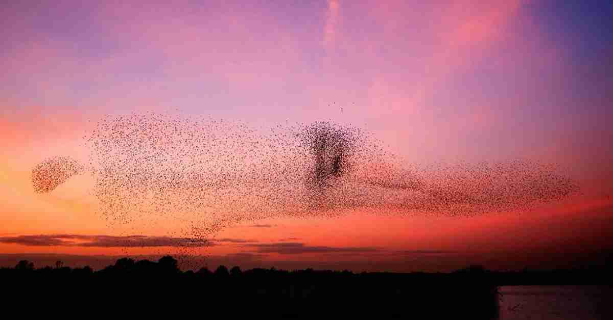 soorten vogels in Nederland 3