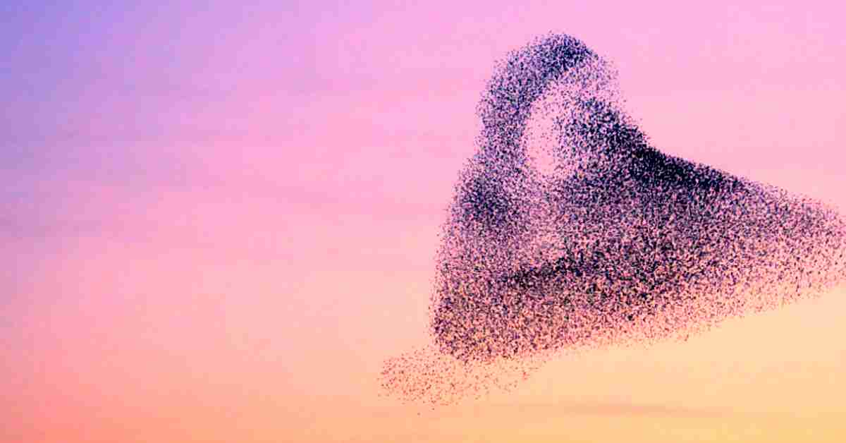 soorten vogels in nederland 4