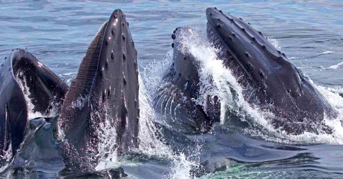 soorten walvissen gespot 1
