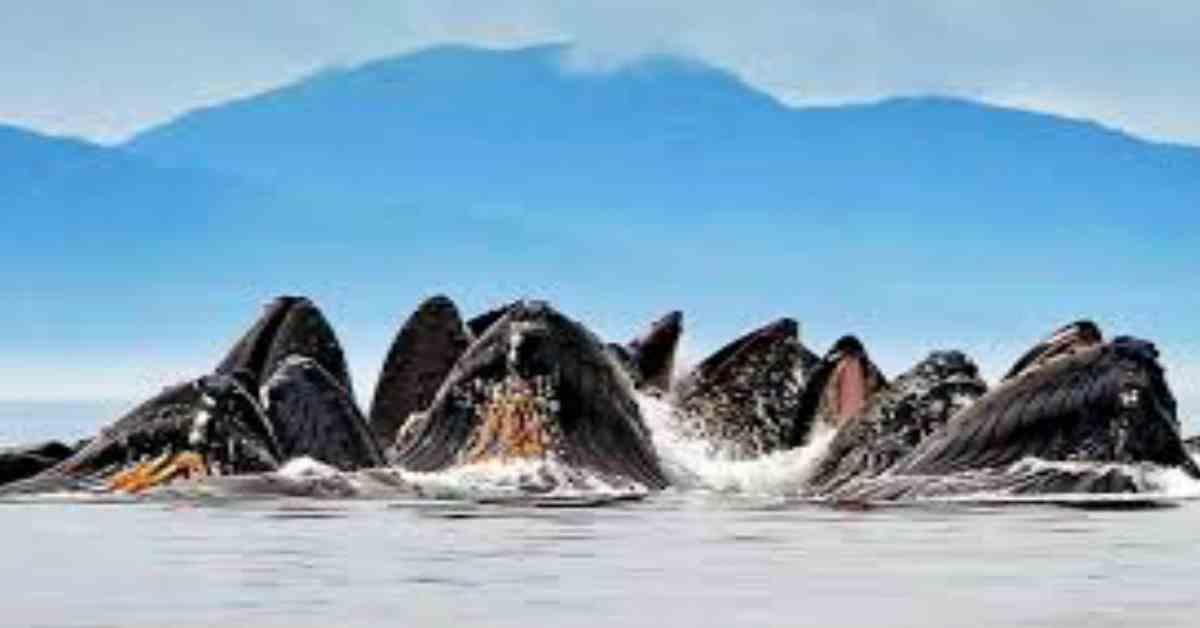 soorten walvissen gespot 3