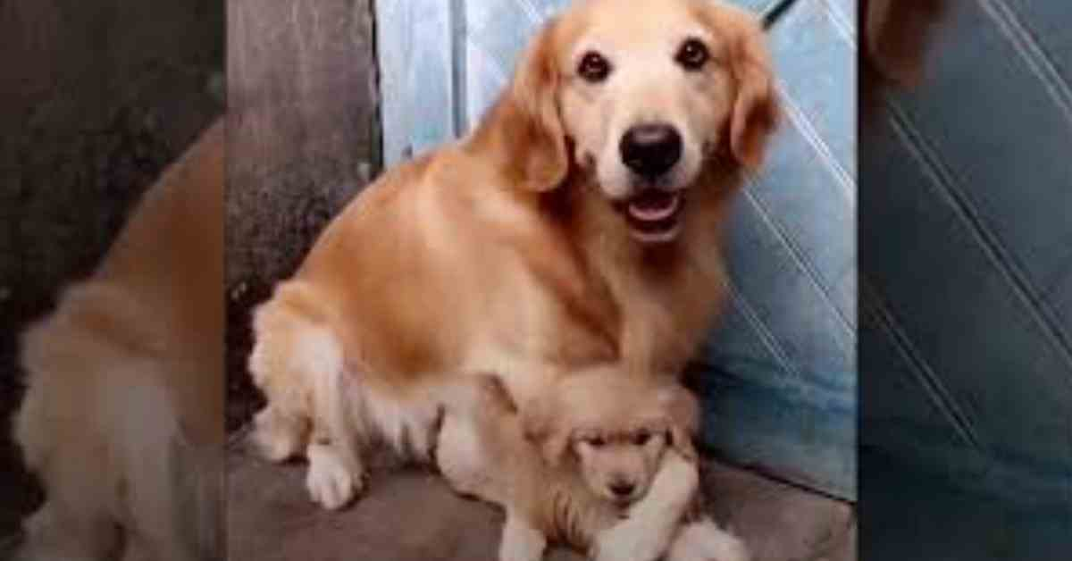 veilig vaderhond 1