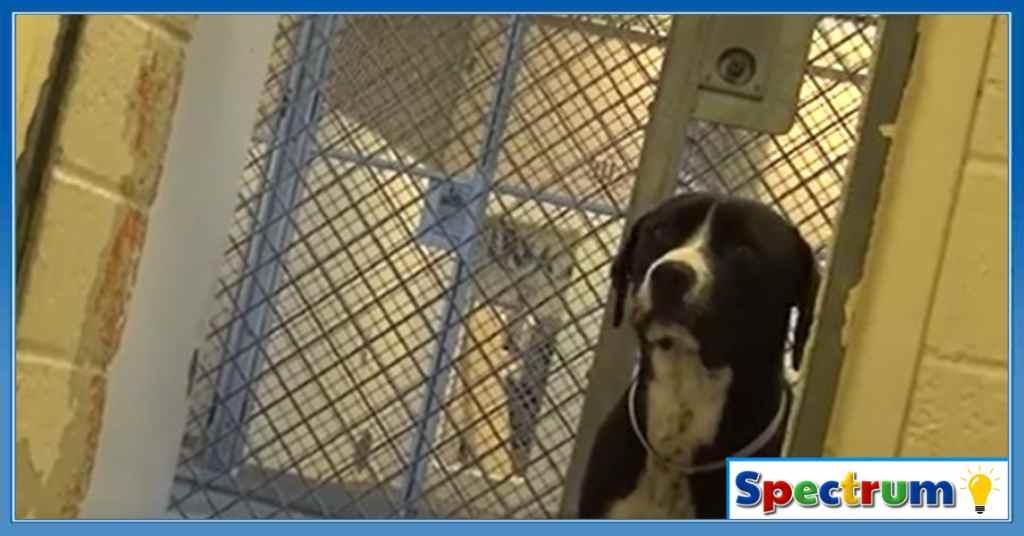 adoptie hond 1
