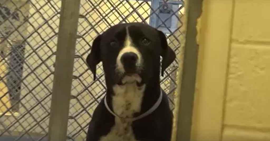 adoptie hond 2