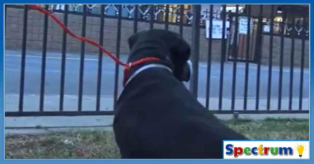adoptie hond 3