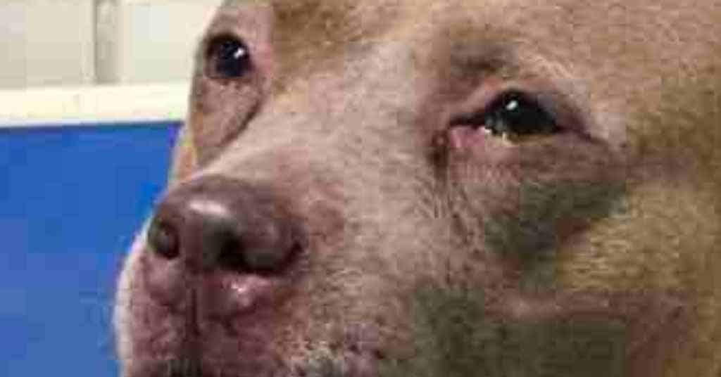 asielhond adopteren 2
