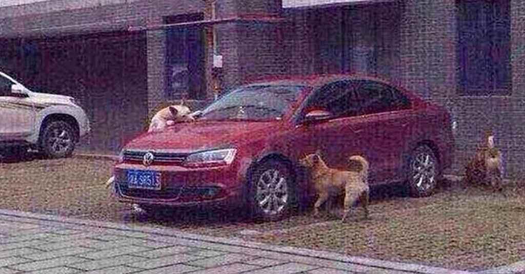 behandeling hond 3a