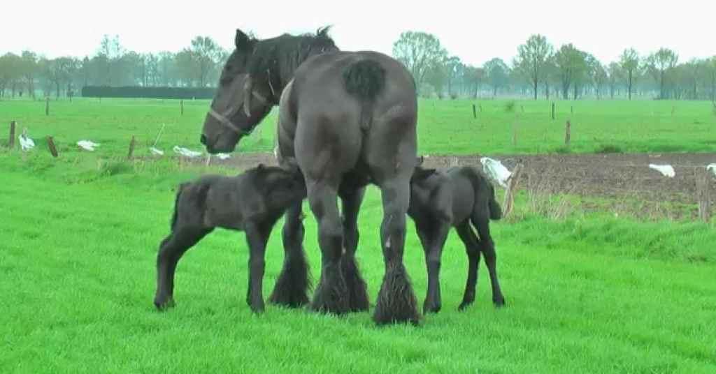 bevalling paard 3