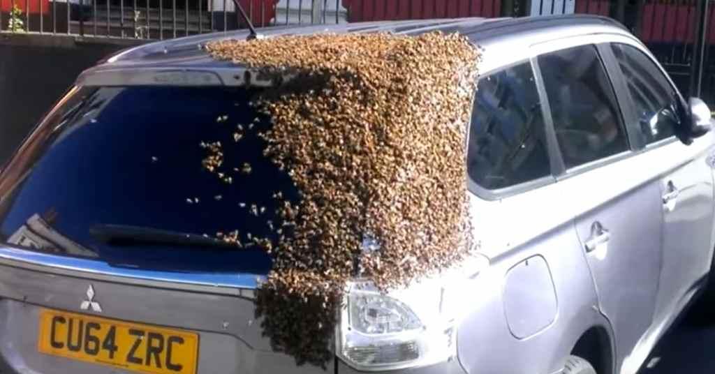bijen 1