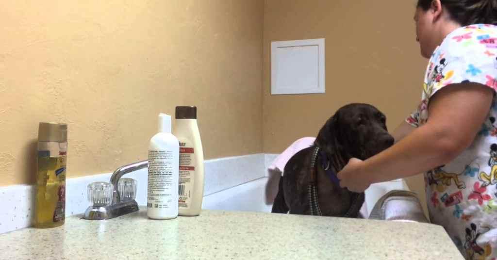 dierenasiel bad hond 1