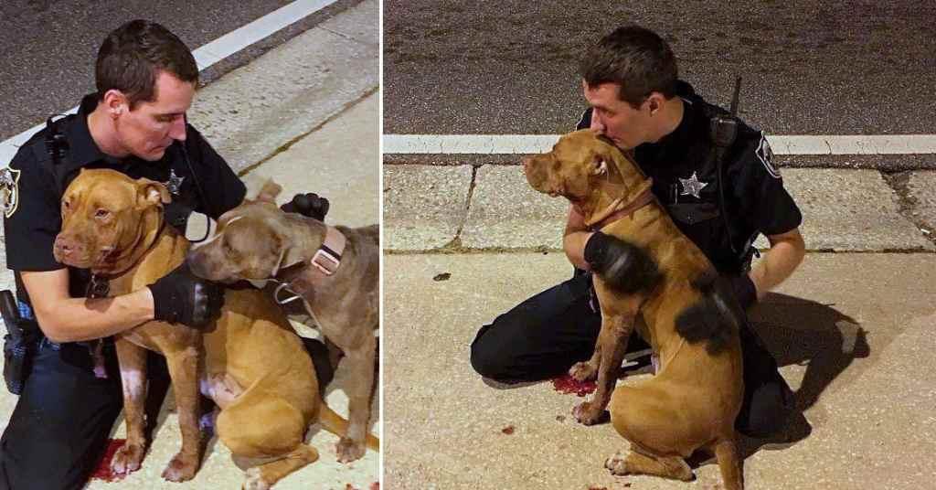 hond gered door agenten 2