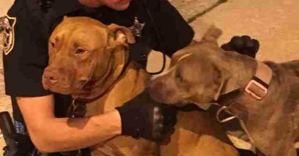 hond gered door agenten 3