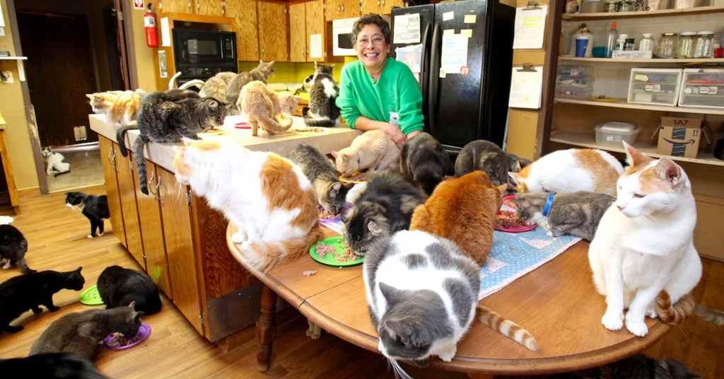 jonge katten verzorgen 1