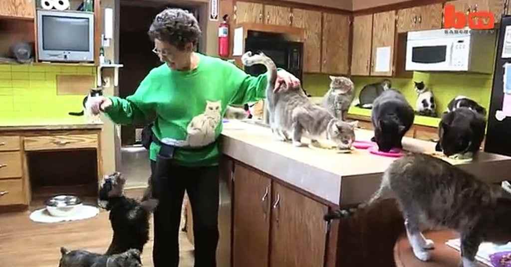 jonge katten verzorgen 3