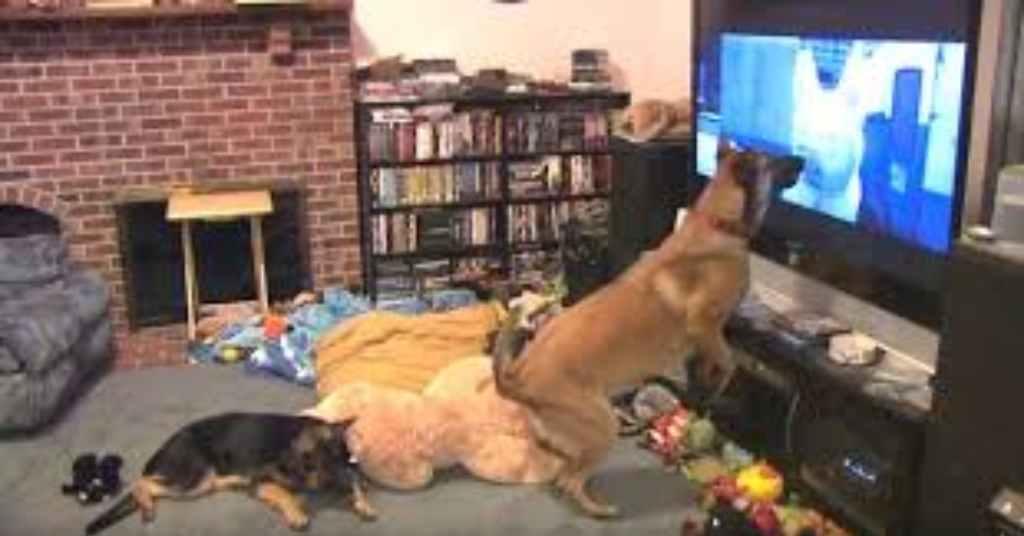 k9 hond kijkt televisie 2