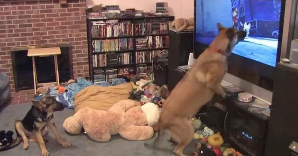 k9 hond kijkt televisie 3
