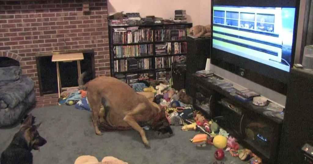 k9 hond kijkt televisie