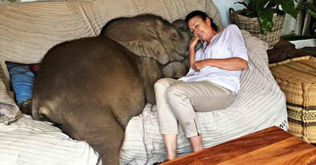 olifant 4
