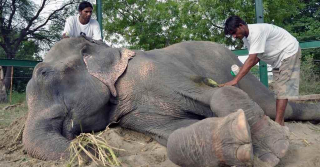 olifant gered 3