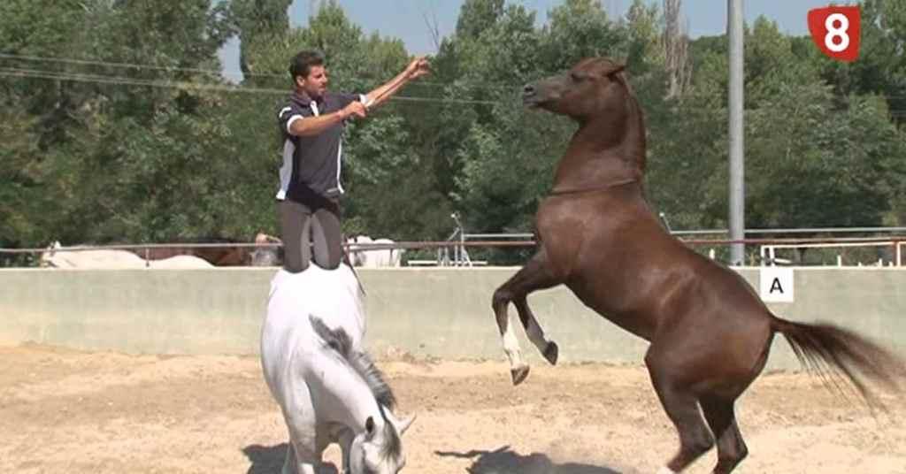 paardenwedstrijd 1