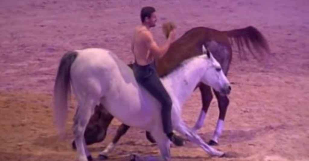 paardenwedstrijd 4
