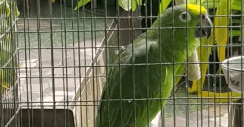 papegaai zingt 2